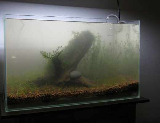 setting up a fish tank