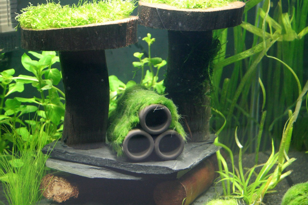 Stocking a 5 gallon fish tank aquariadise for 5 gallon fish tanks