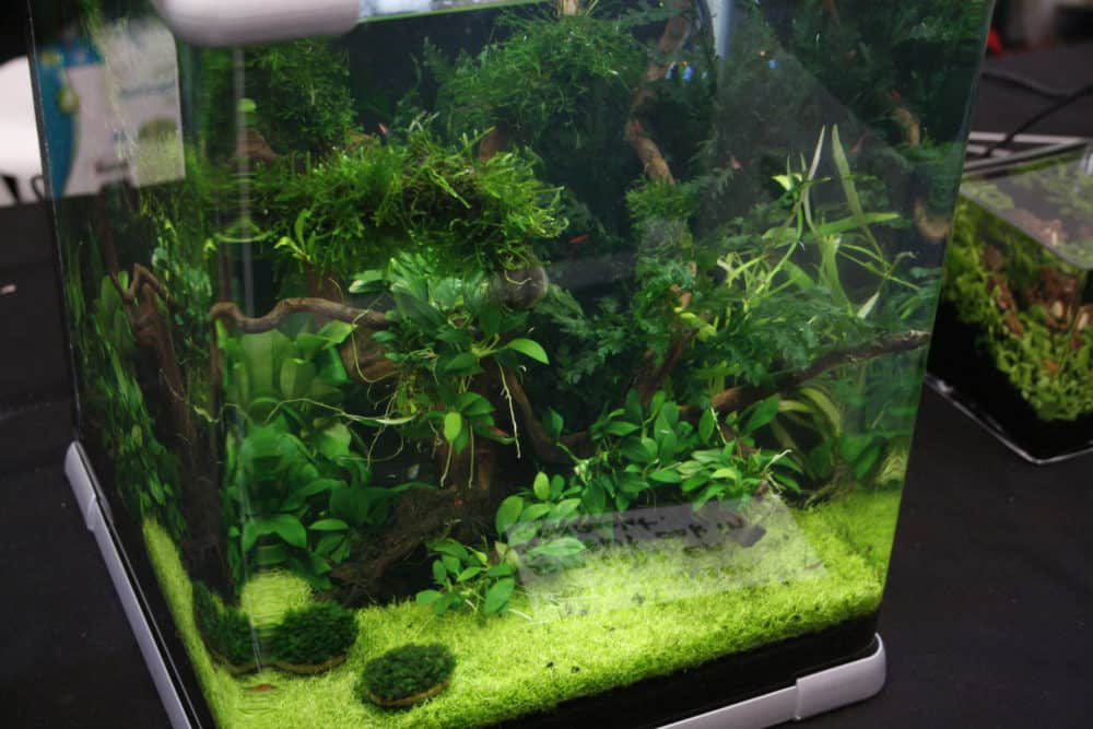 nano planted tank 6 tiny aquarium plants aquariadise. Black Bedroom Furniture Sets. Home Design Ideas