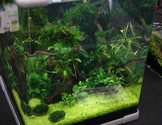 Nano planted tank | 6 tiny aquarium plants!
