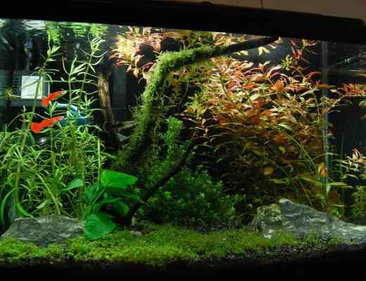 background aquarium plants