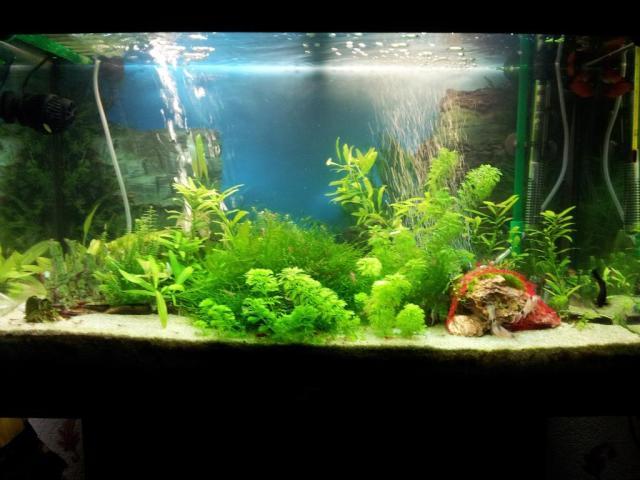 Zen fish tank decorations my 10 gallon zen garden fish for Zen fish tank