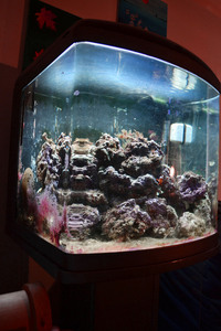 Nano 90 litre Marine aquarium tank, FULL SETUP with live rock and fish