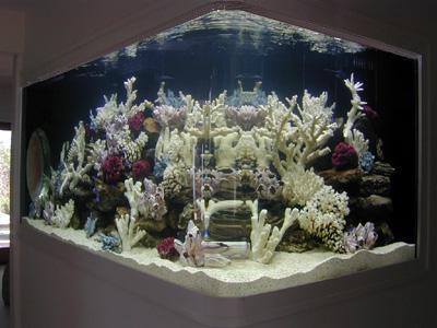 500 Gallon ' L' Shaped Marine Fish Tank, Aquarium Design, Marine