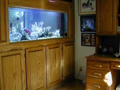 100 Gallon Marine Fish Tank, Aquarium Design, Marine Aquariums and