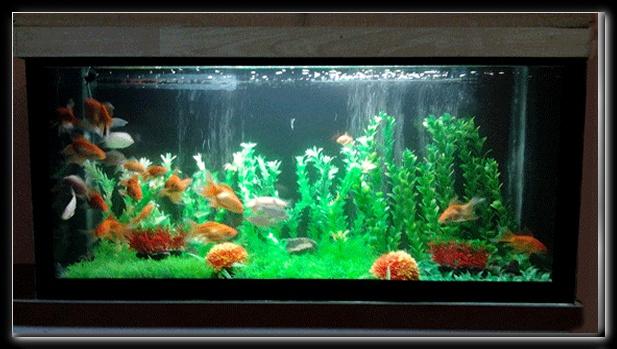 Aquarium, Artifical Garden Aquarium in aquarium chennal, aquarium