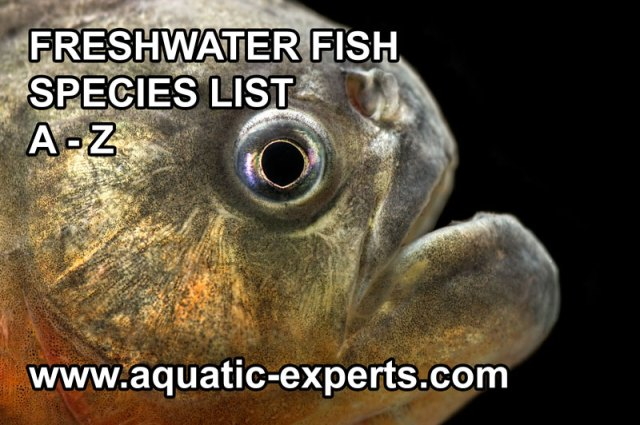 Freshwater aquarium fish list types of catfish for for Common freshwater aquarium fish