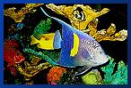 Aquatic Creations Group, Inc | Aquarium Maintenance & Design: Raleigh