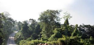 07-Khao-Yai-preserved-forest-Luke-Yeung