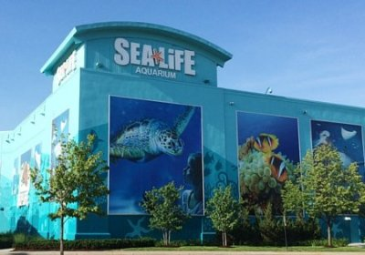 23 Things at Sea Life Michigan That Are Well Worth The Price of Admission