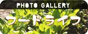 Web Gallery-Foodlife