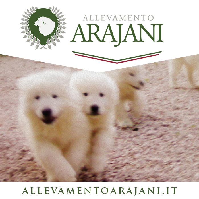 AllevamentoArajani.it
