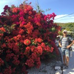 And the bougainvilleas .. . spectacular! [final image in this gallery - close to move to next]