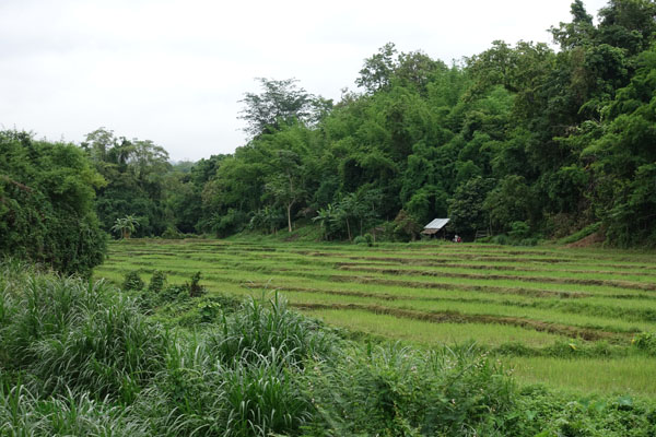 Chaeson National Park - Rice Field