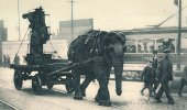 An elephant moves equipment at a munitions plant in Sheffield, England, during World War I.