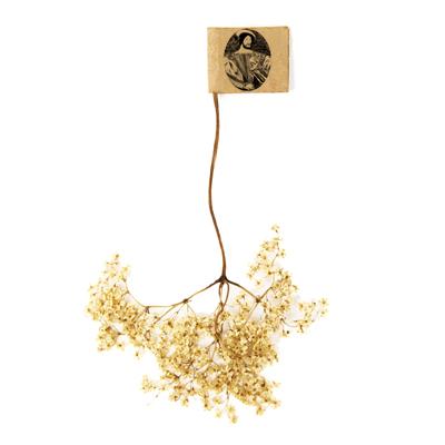 fleur-de-sureau-2