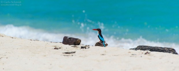 Kingfisher auf Smith and Ross Island