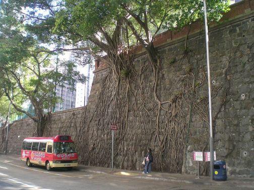 hong kong wall trees