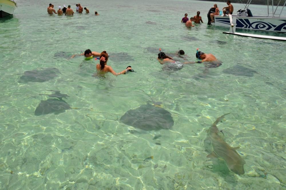Bora Bora Shark & Ray Tour