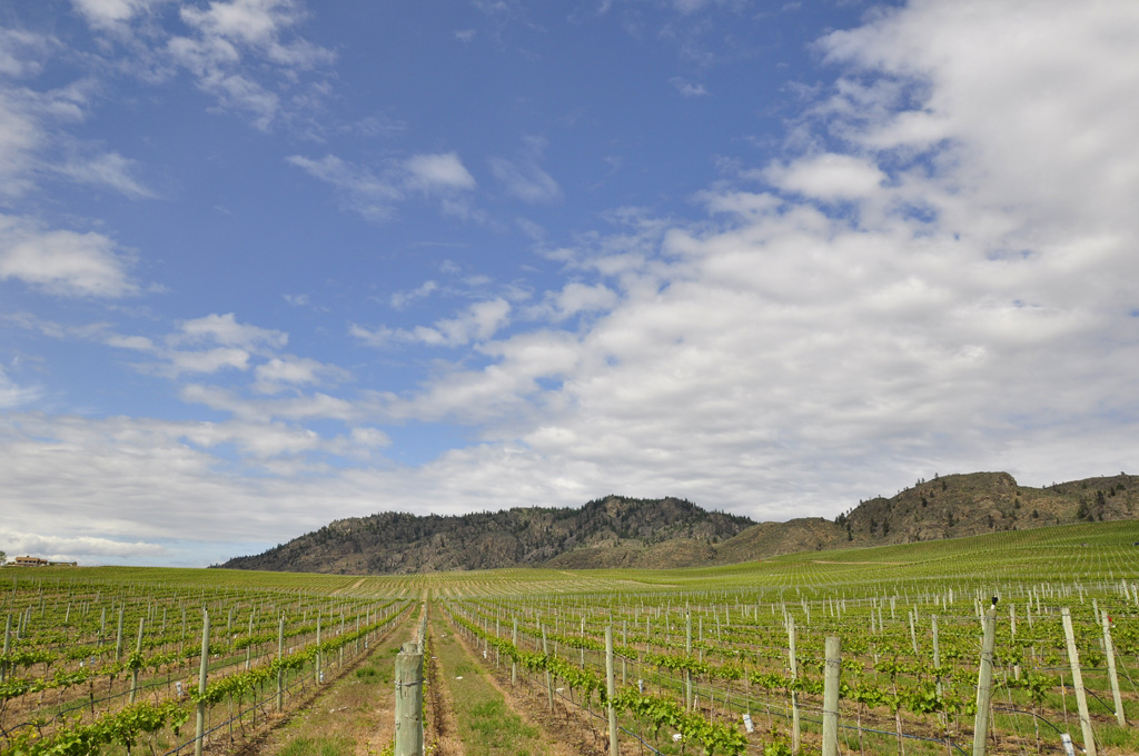 Vineyards in Osoyoos