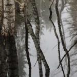 Birkenstämme spiegeln sich im Moor
