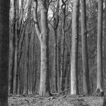 Alter Buchenbestand im Naturpark Steigerwald