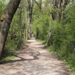 Weg unter alten Weiden im Naturschutzgebiet Felwies am Chiemsee
