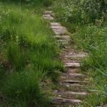 Holzbohlenweg durchs Grassauer Moor