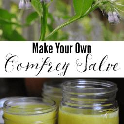 Make Your Own Comfrey Salve