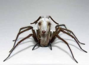 a1sx2_Original1_AC-spider-goats
