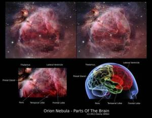 b2ap3_thumbnail_AC---16---orion-brain-map