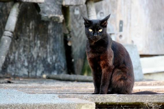 black cat sinister
