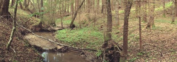 photo credit: Woodland Views via photopin (license)