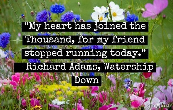 My heart has joined the thousand, for my friend stopped running today. Watership Down by Richard Adams
