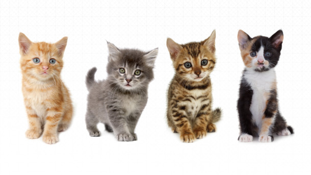 UberKITTENS is back: Yes, Uber will bring you kittens!