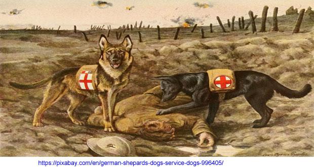 german-shepards-996405_1280