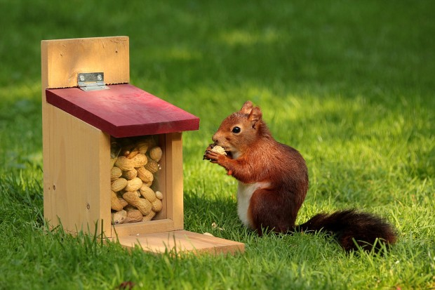 Squirrel appreciation day: Squirrels help plants to thrive.