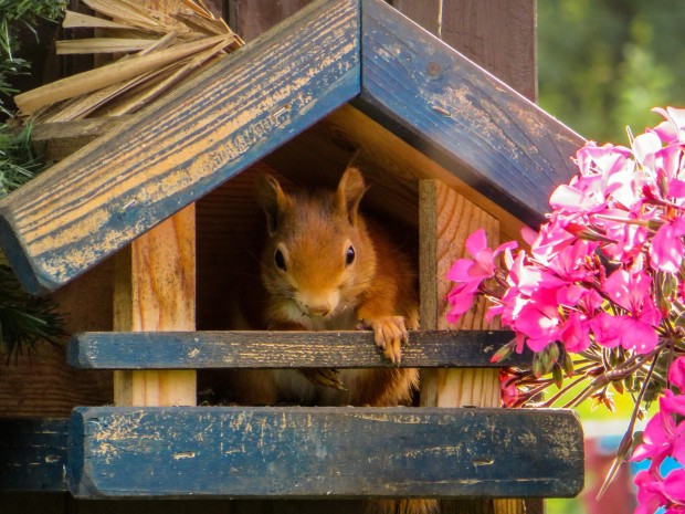 Squirrel appreciation day: Squirrels can create shelters for other animals.