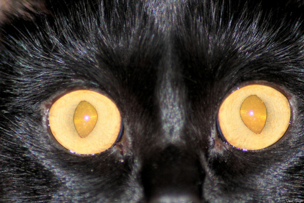 worst drug dealers: cat with dilated pupils