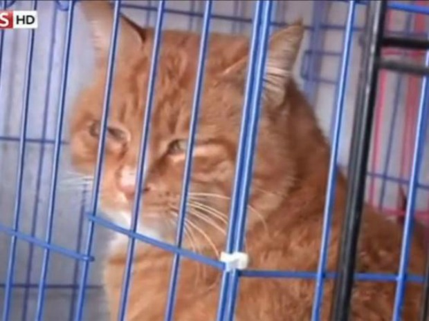 slacktivism: 1000 stolen cats rescued in china