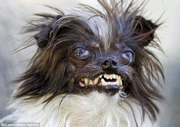 ugliest dogs Source