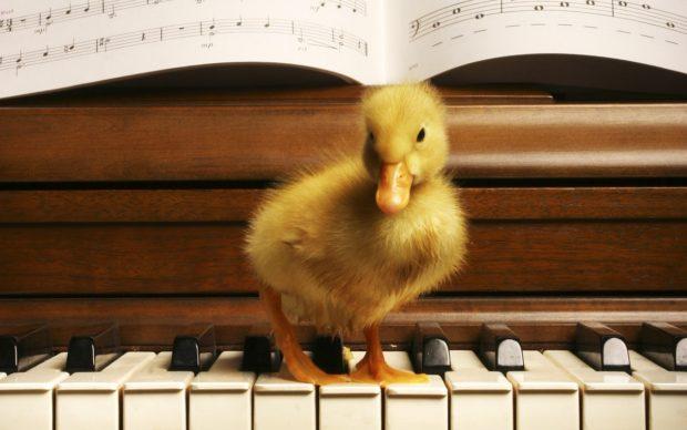 Buono Music