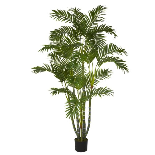 Medium Of Areca Palm Tree