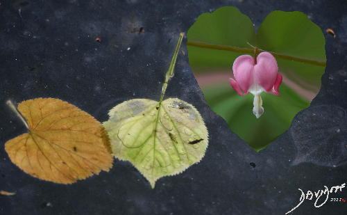 Heart Shaped Leaves Of Love Lost Art In Anatomy