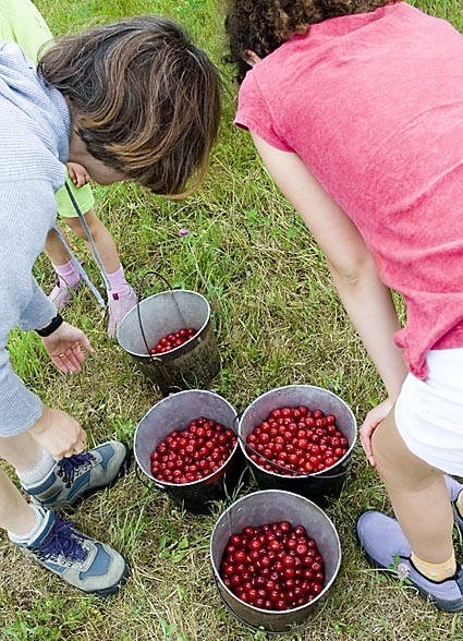 2-cherries-in-buckets.jpg