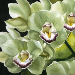 Spring Green Orchid Alfred Ng