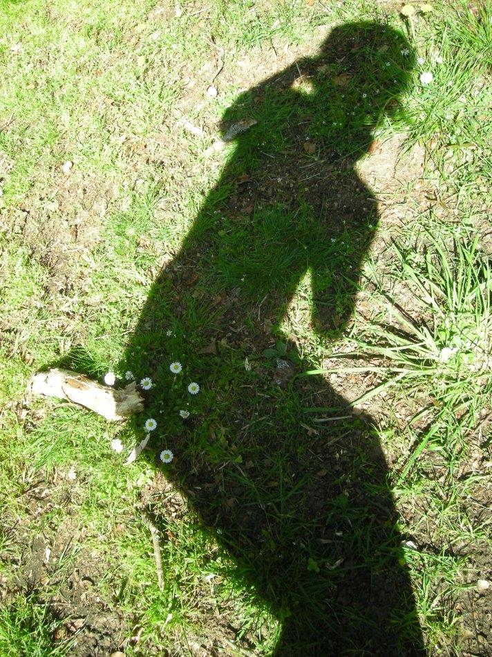 shadow-plant-16