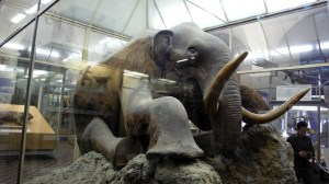 Mammoth exhibit in a science museum in St. Petersburg, Russia