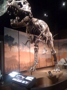 T-rex on exhibit at the Tellus Museum, one of a large collection of fossils in this wonderful learning environment.