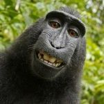 The Monkey-Selfie Copyright Case Is Back In Court, With A Primatologist Weighing In (Guess On Whose Side)